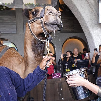 The Barn opens in Sunway Pyramid with Barny the Camel